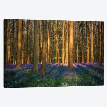 The Bloom, Hallerbos, Belgium Canvas Print #NIL210} by Jim Nilsen Canvas Print
