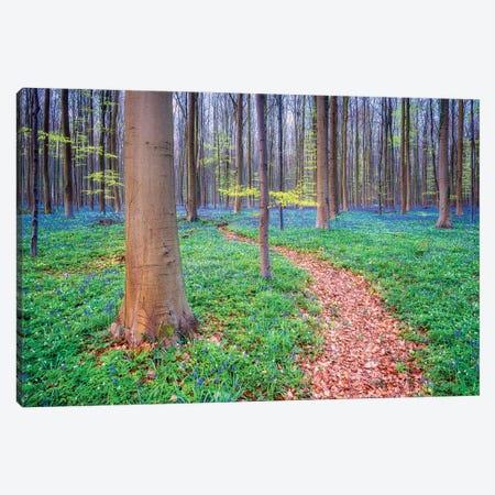 The Way, Hallerbos, Belgium Canvas Print #NIL234} by Jim Nilsen Canvas Wall Art