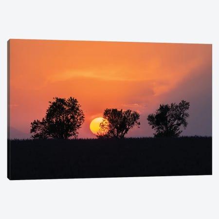 Valensole Sunset, Provence, France Canvas Print #NIL239} by Jim Nilsen Canvas Art Print