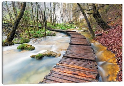 A Walk In The Woods, Plitvice Lakes National Park, Croatia Canvas Art Print