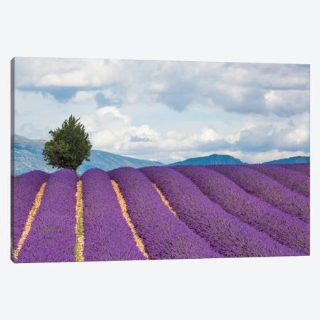 Ready For Harvest, Provence, France Canvas Print #NIL41} by Jim Nilsen Canvas Wall Art