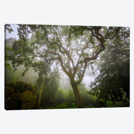 Sintra Forest, Sintra, Portugal Canvas Print #NIL50} by Jim Nilsen Canvas Art Print