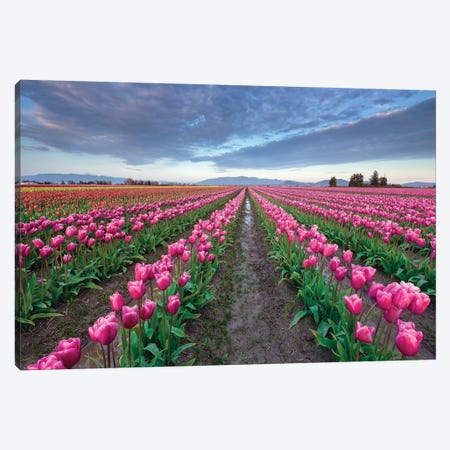 Skagit Bloom, Skagit Valley, Washington Canvas Print #NIL51} by Jim Nilsen Canvas Art Print