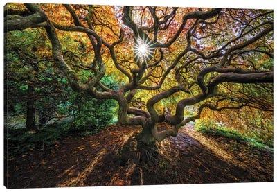 Tentacles And Sun, Seattle, Washington I Canvas Art Print