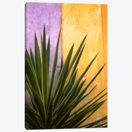 Tlaquepaque Bouquet, Tlaquepaque, Mexico Canvas Print #NIL67} by Jim Nilsen Canvas Print