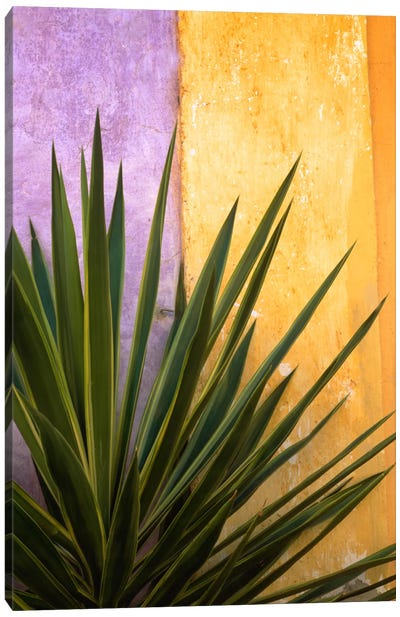 Tlaquepaque Bouquet, Tlaquepaque, Mexico Canvas Art Print