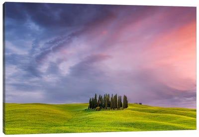 To The Heavens, Tuscany, Italy Canvas Art Print