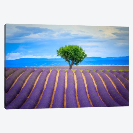 To The Tree, Provence, France Canvas Print #NIL69} by Jim Nilsen Canvas Wall Art
