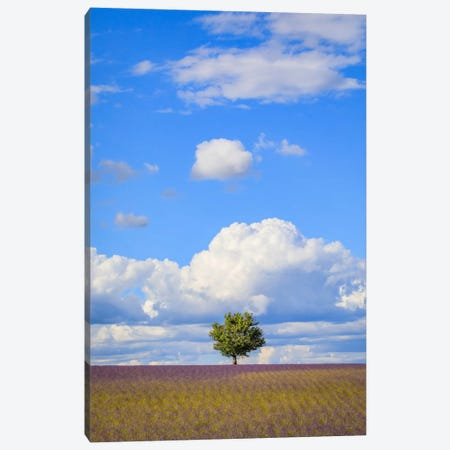 Tree And Clouds, Provence, France Canvas Print #NIL70} by Jim Nilsen Canvas Art Print