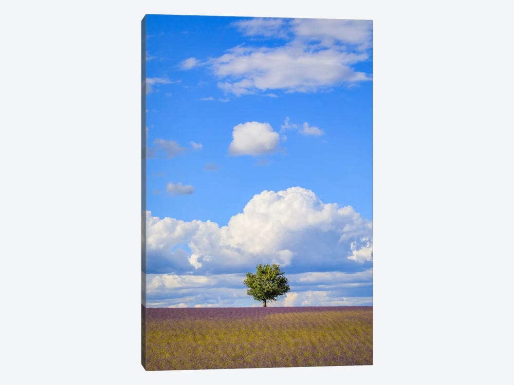Tree And Clouds, Provence, France by Jim Nilsen 1-piece Canvas Art Print