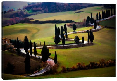 Tuscan Serpent, Tuscany, Italy Canvas Art Print