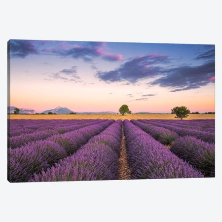 Valensole Sunset, Provence, France Canvas Print #NIL72} by Jim Nilsen Canvas Art Print