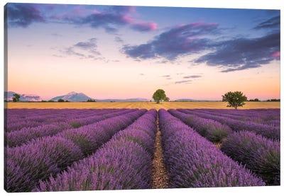 Valensole Sunset, Provence, France Canvas Art Print