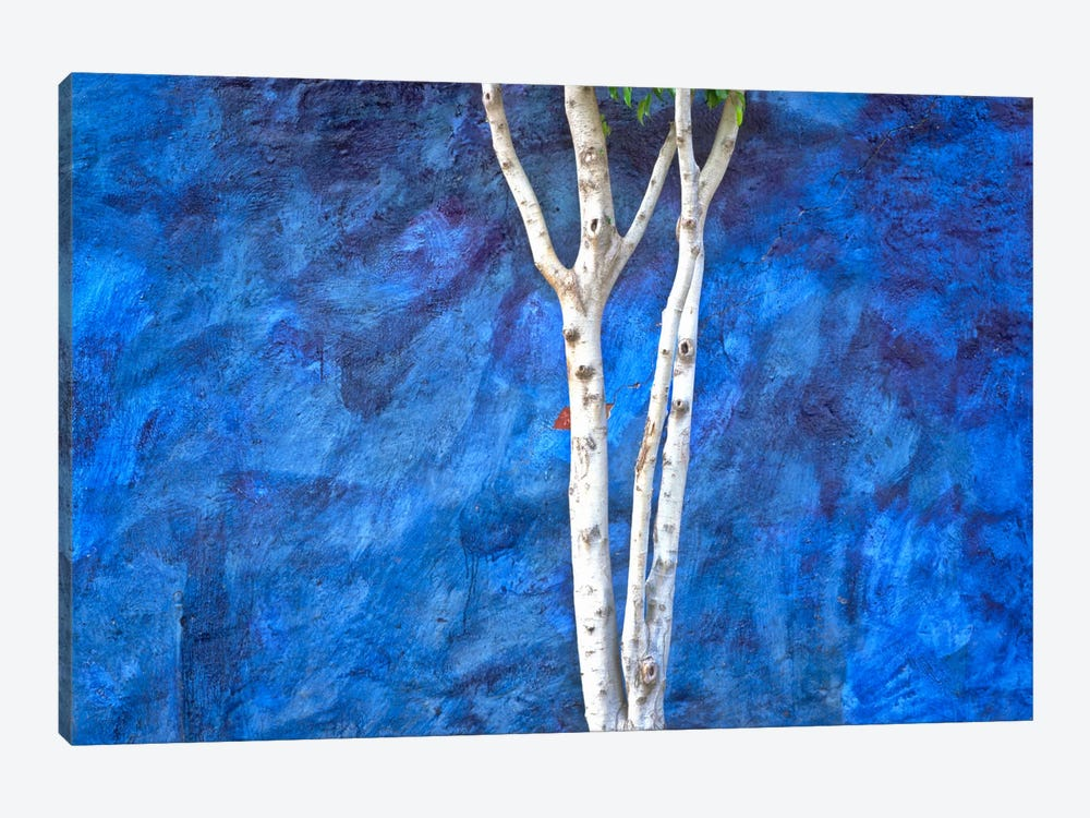 White On Blue, Ajijic, Mexico by Jim Nilsen 1-piece Canvas Wall Art
