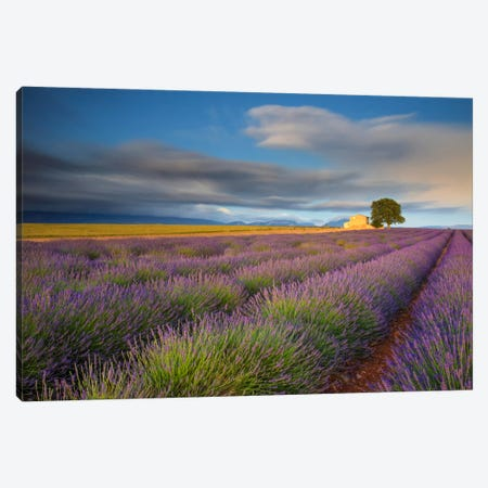 Worth The Wait, Provence, France Canvas Print #NIL79} by Jim Nilsen Canvas Art Print