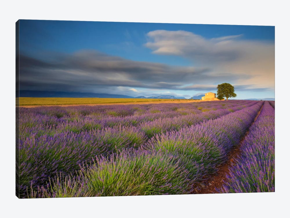 Worth The Wait, Provence, France by Jim Nilsen 1-piece Canvas Artwork