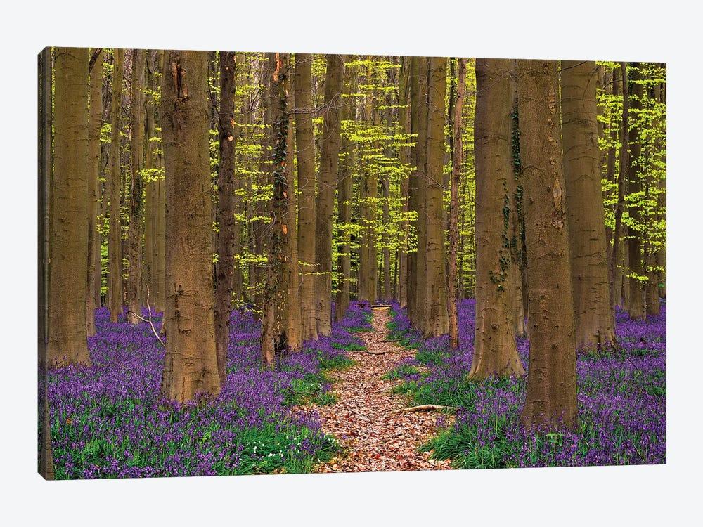 A Walk In The Woods, Hallberbos, Belgium by Jim Nilsen 1-piece Art Print