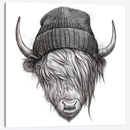 Highland Cattle Canvas Print #NKV37} by Nikita Korenkov Canvas Art Print