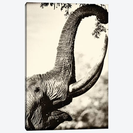 Reaching High Canvas Print #NLP5} by Niassa Lion Project Canvas Artwork