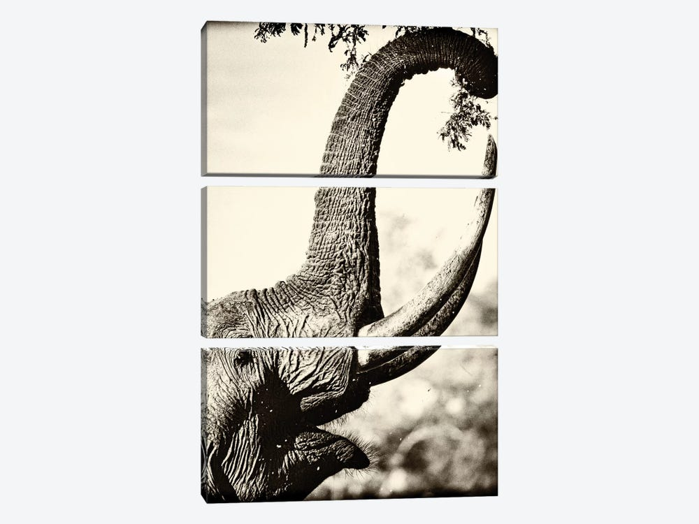 Reaching High by Niassa Lion Project 3-piece Art Print