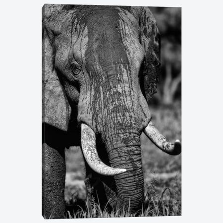 Tusks Canvas Print #NLP6} by Niassa Lion Project Canvas Art
