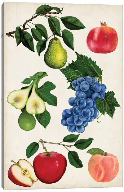Fruit Collection I Canvas Art Print