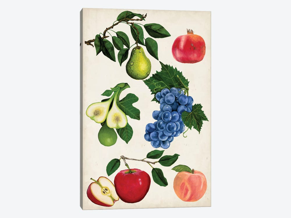 Fruit Collection I by Naomi McCavitt 1-piece Canvas Art Print