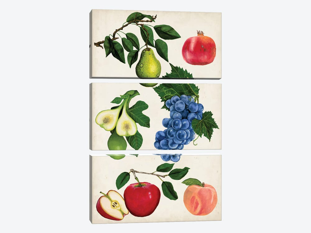 Fruit Collection I by Naomi McCavitt 3-piece Canvas Art Print