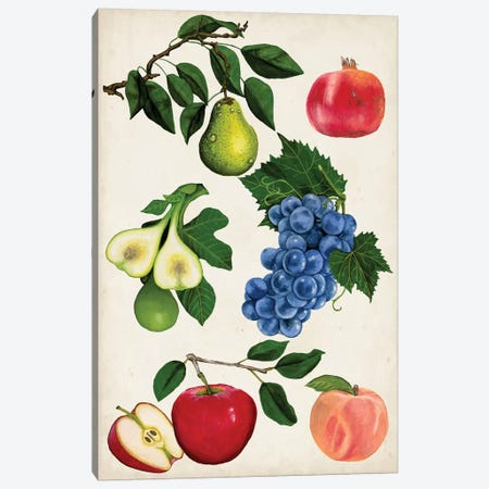 Fruit Collection I Canvas Print #NMC100} by Naomi McCavitt Art Print
