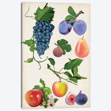 Fruit Collection II Canvas Print #NMC101} by Naomi McCavitt Art Print