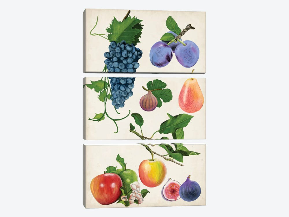 Fruit Collection II by Naomi McCavitt 3-piece Canvas Art