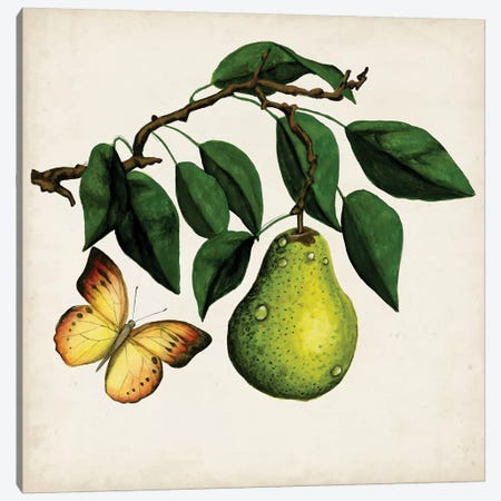 Fruit With Butterflies I Canvas Print #NMC102} by Naomi McCavitt Canvas Print