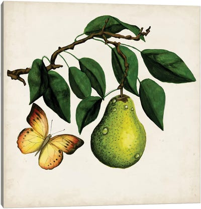 Fruit With Butterflies I Canvas Art Print