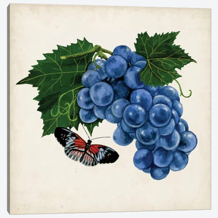 Fruit With Butterflies II Canvas Print #NMC103} by Naomi McCavitt Art Print