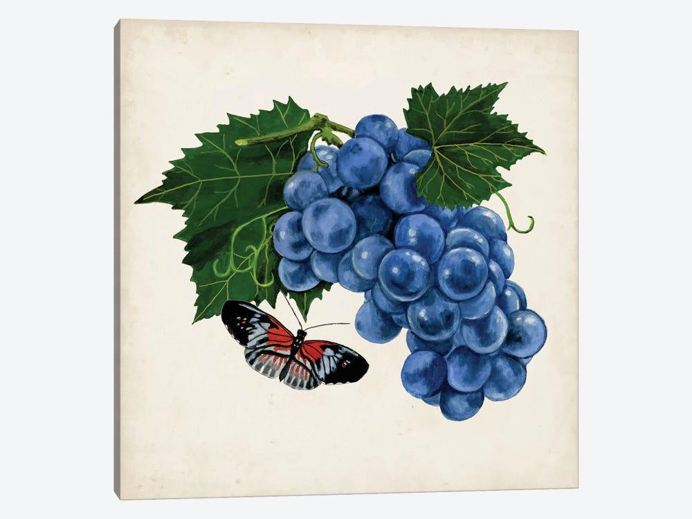 Fruit With Butterflies II by Naomi McCavitt 1-piece Canvas Wall Art