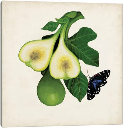 Fruit With Butterflies III Canvas Art Print