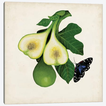 Fruit With Butterflies III Canvas Print #NMC104} by Naomi McCavitt Canvas Wall Art