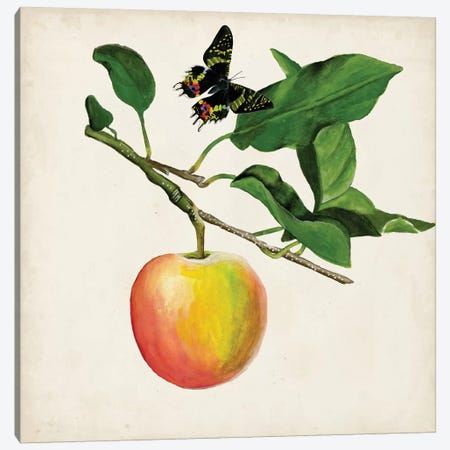 Fruit With Butterflies IV Canvas Print #NMC105} by Naomi McCavitt Canvas Wall Art