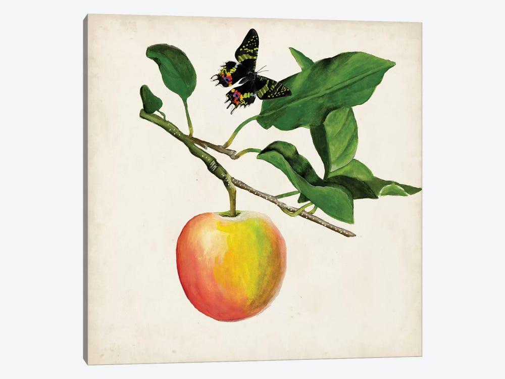 Fruit With Butterflies IV by Naomi McCavitt 1-piece Canvas Art