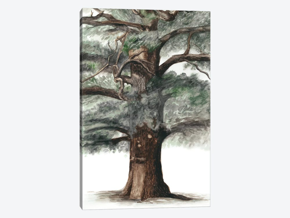 Oak Tree Composition I by Naomi McCavitt 1-piece Canvas Wall Art