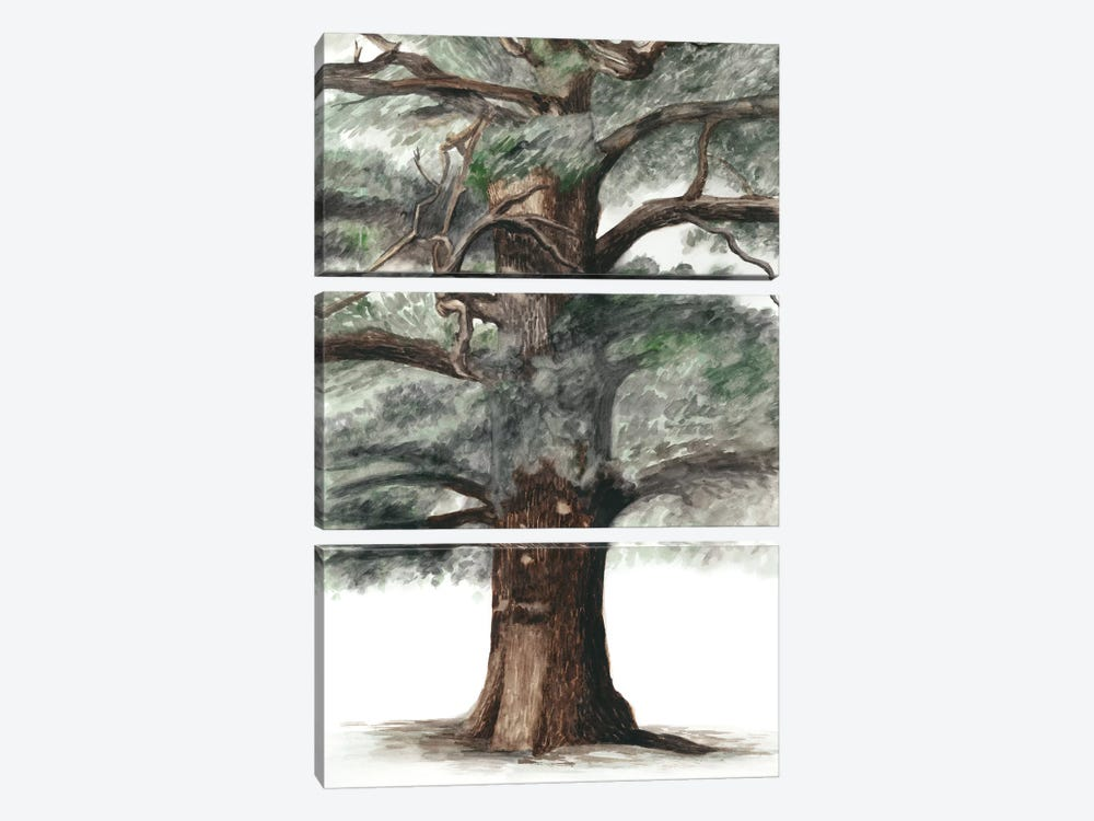 Oak Tree Composition I by Naomi McCavitt 3-piece Canvas Wall Art