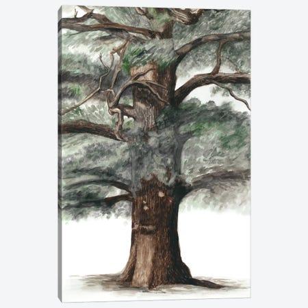 Oak Tree Composition I 3-Piece Canvas #NMC116} by Naomi McCavitt Canvas Print