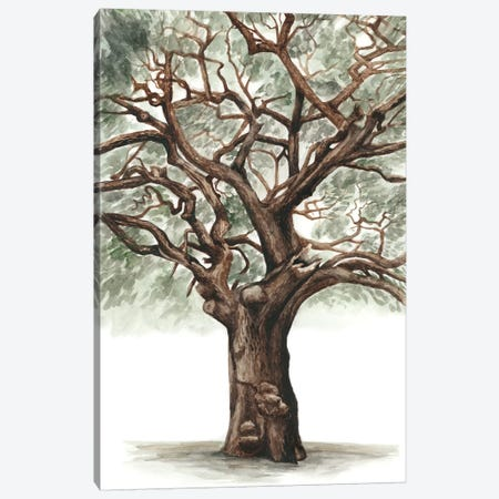 Oak Tree Composition II Canvas Print #NMC117} by Naomi McCavitt Canvas Print