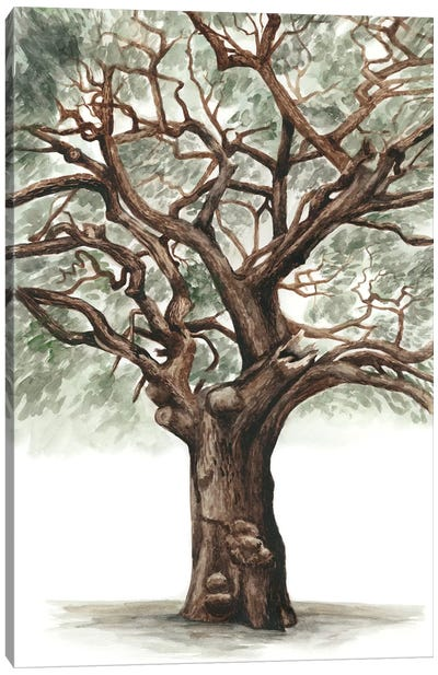 Oak Tree Composition II Canvas Art Print