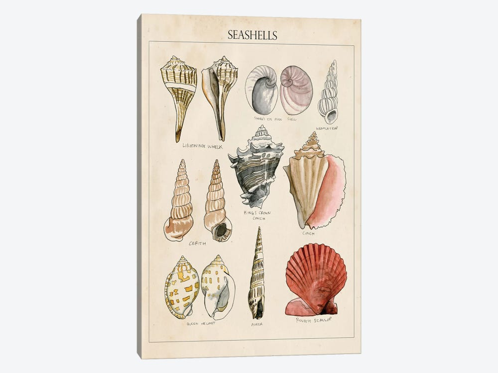 Seashell Sketch II 1-piece Canvas Art Print