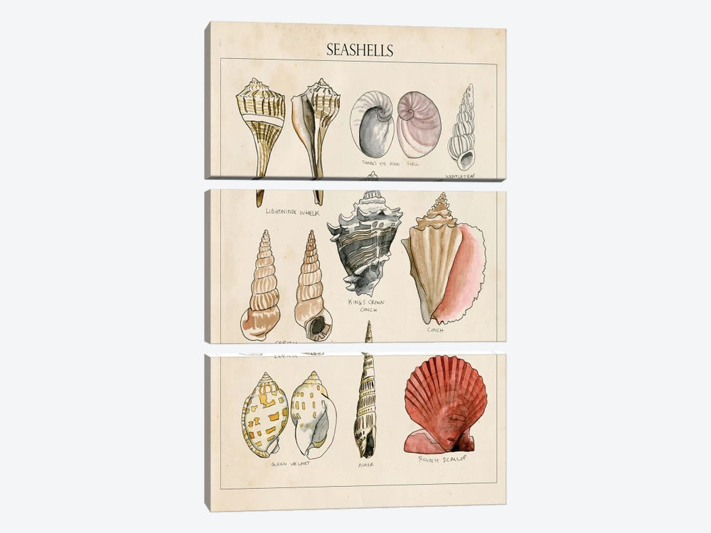 Seashell Sketch II by Naomi McCavitt 3-piece Art Print