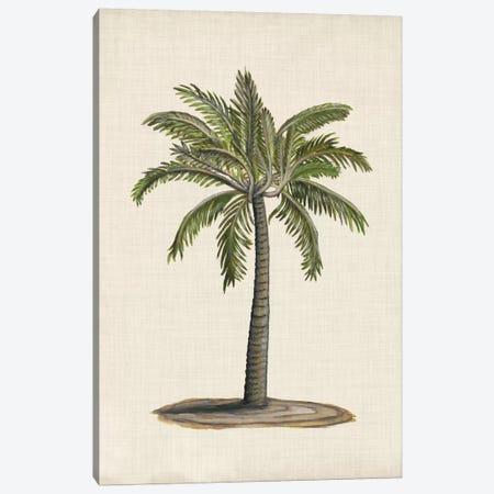 British Palms I Canvas Print #NMC134} by Naomi McCavitt Art Print