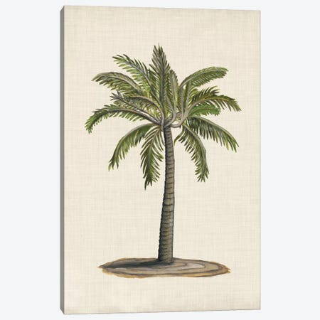 British Palms I Canvas Print #NMC134} by Naomi McCavitt Art Print