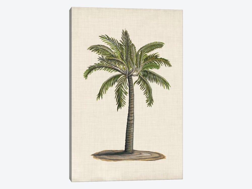 British Palms I by Naomi McCavitt 1-piece Canvas Wall Art