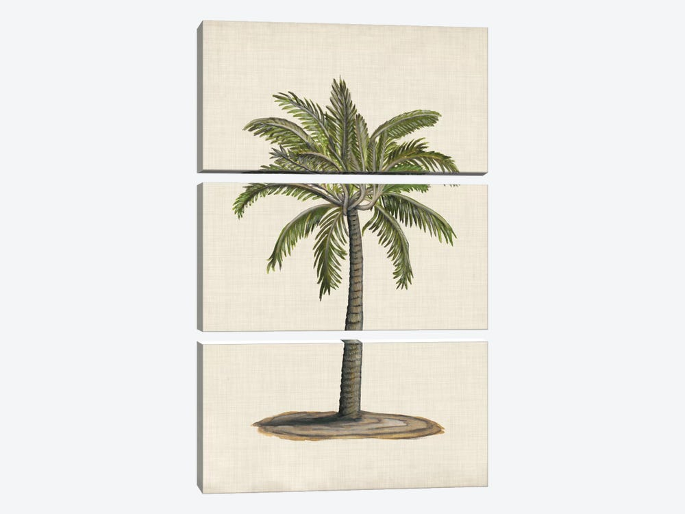 British Palms I by Naomi McCavitt 3-piece Canvas Artwork